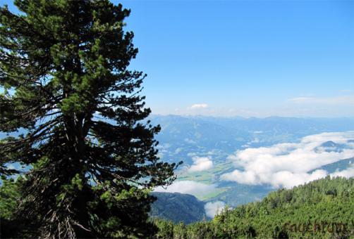 Zirbenharz Österreich